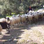 Individual Hiking Tour Sfakia - Information and Prices - 4