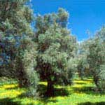 Weekly program with daily walks in central Crete - Rethymno - 4